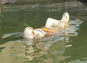 બિહારમાં ગંગા નદીમાં 150 મૃતદેહો તણાઈ આવતા અરેરાટી