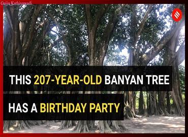 207 साल पुराने पेड़ को बचाने आगे आए ग्रामीण, सरकार का ध्यान खींचने के लिए हर साल मना रहे जन्मदिन